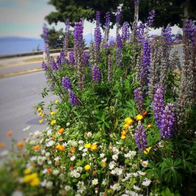 primavera en bariloche colores y excursiones