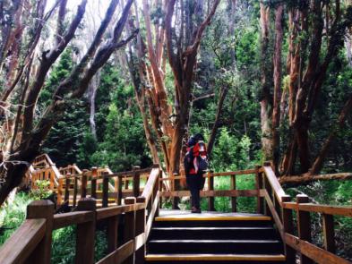 sendero bosque de arrayanes