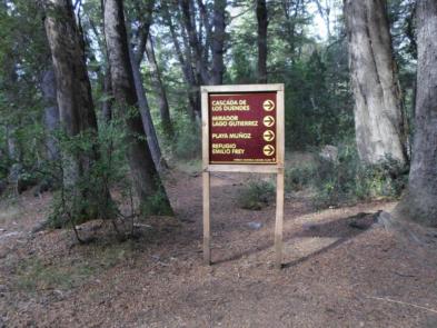 bosque parque nacional nahuel huapi